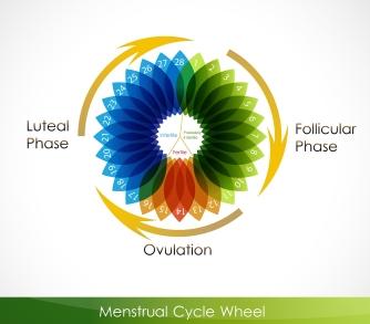 bigstock_Menstrual_cycle_calendar_23227232